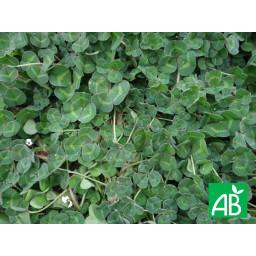 Ferticover Bio 10 Kg