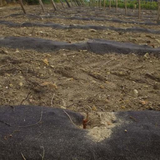 Feutre de paillage biodégradable