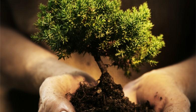 Plantez un arbre avec Alsavit'